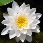 Význam Zenu (Co je to Zen, část 1.)