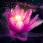 Buddhovská podstata