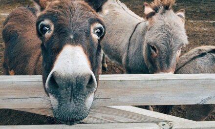 Nehádejte se s osly